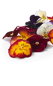 cab_001001006_agf_tuinkruiden_eetbare_bloemen_174x283.jpg