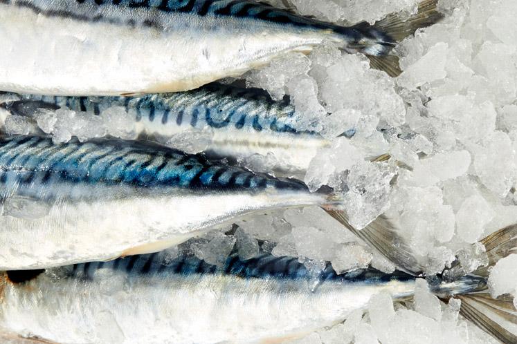 Inspiratie en recepten op het gebied van vis, schaal- en schelpdieren