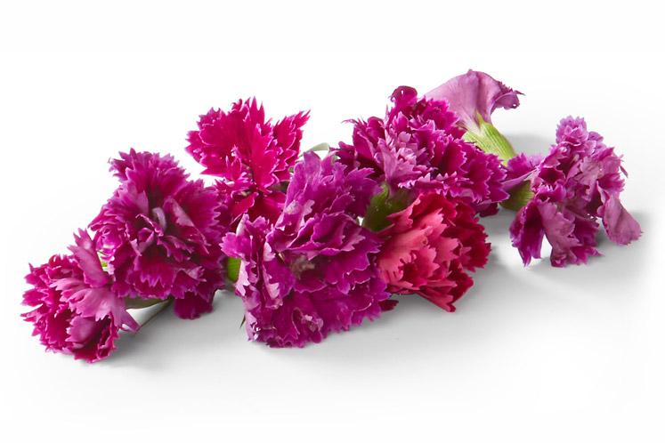 ban_mag_voorjaar_verse_bloemetjes_anjers_1802_747x498.jpg
