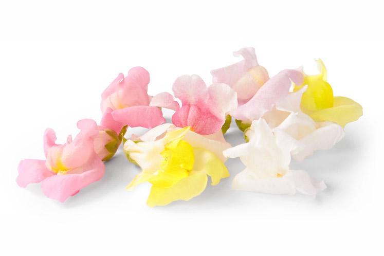 ban_mag_voorjaar_verse_bloemetjes_leeuwenbekjesmix_1802_747x498.jpg