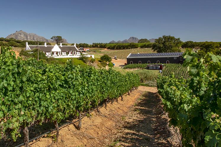 Aaldering Vineyards & Wines in Devon Valley