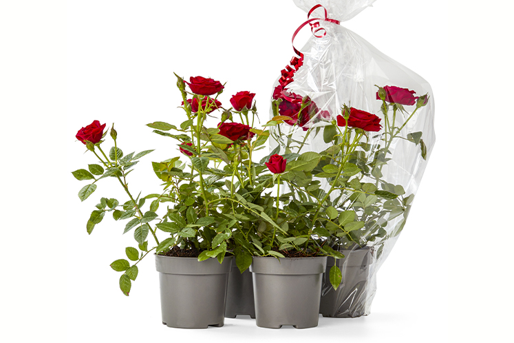 Eetbare rozen