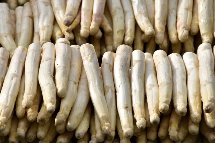 Alles over de asperge