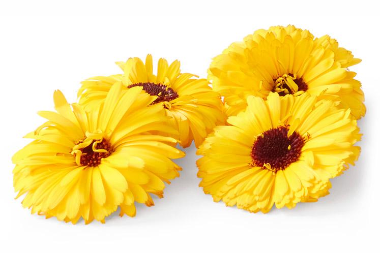 ban_mag_voorjaar_verse_bloemetjes_calendula_1802_747x498.jpg