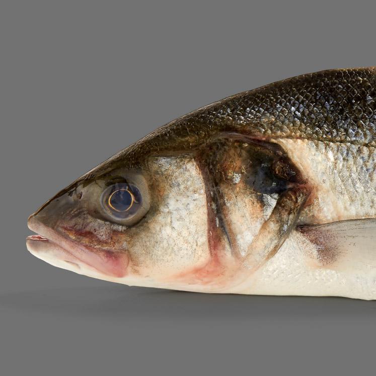 Vissen smoelenboek