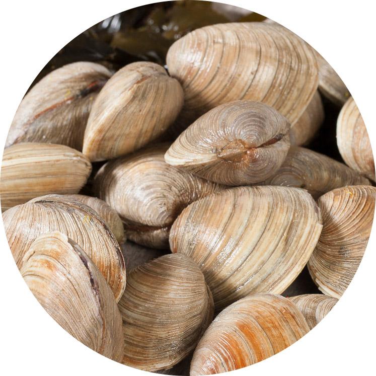 ban_seg_cou04_schelpjes_clams_747x747.jpg