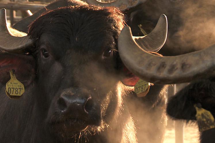 Buffelmozzerella | IK KOOK BEWUST