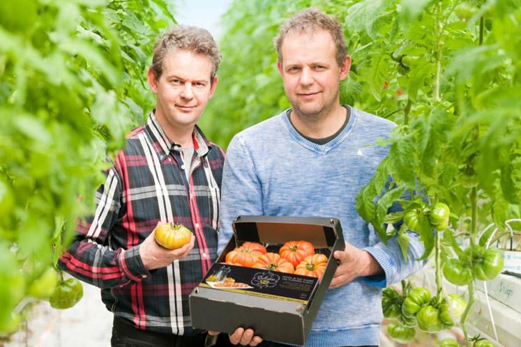 ban_the_ikb_verhaal_van_den_belt_tomaten_1810_747x498.jpg