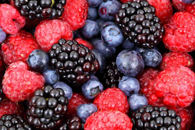 Zomers fruit