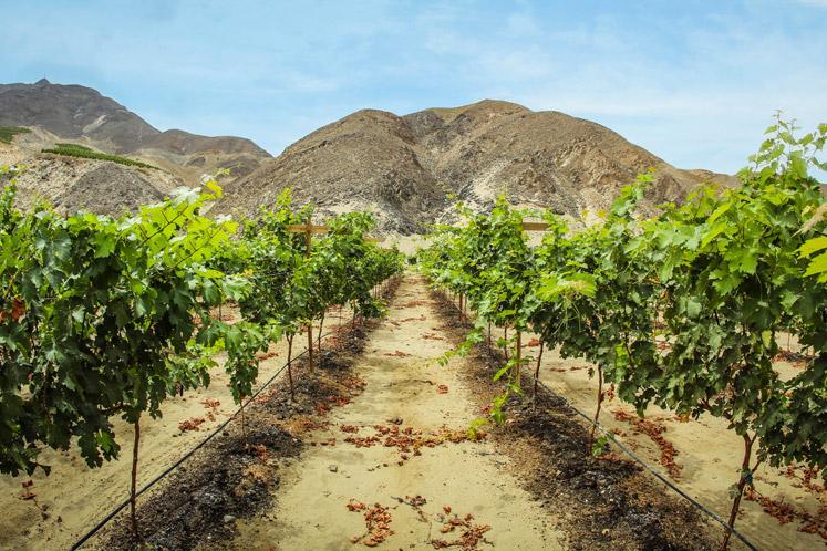 Verrassende wijnen en streken | De verhalen over onze smaken