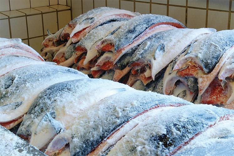 Zouten van bijvoorbeeld zalm zorgt ervoor dat het vocht uit het visvlees wordt getrokken. Hierdoor krijgt het vlees nog meer smaak.