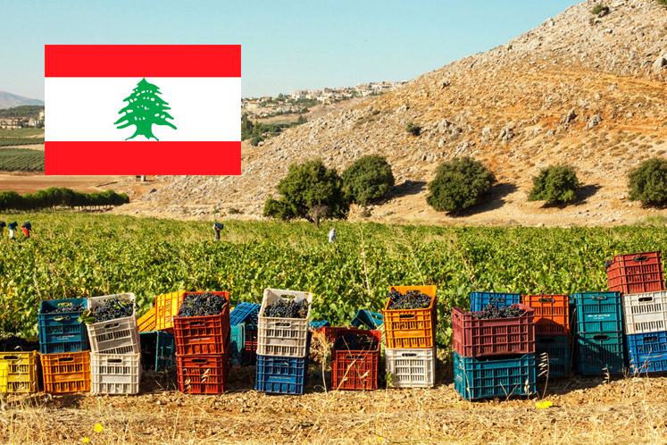 Wijnland Libanon