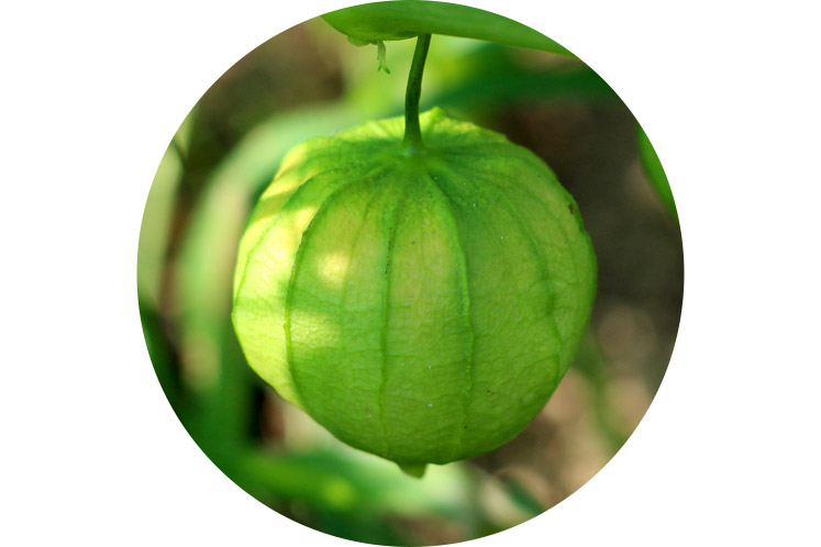 Tomatillo | Groene groenten