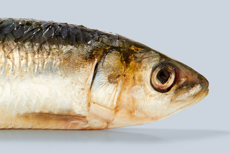 ban_spc_vis_wilde_sardines_1606_747x498.jpg