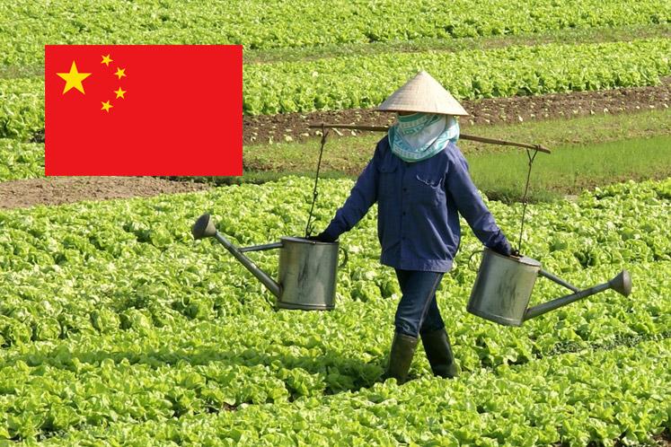 Wijnland China