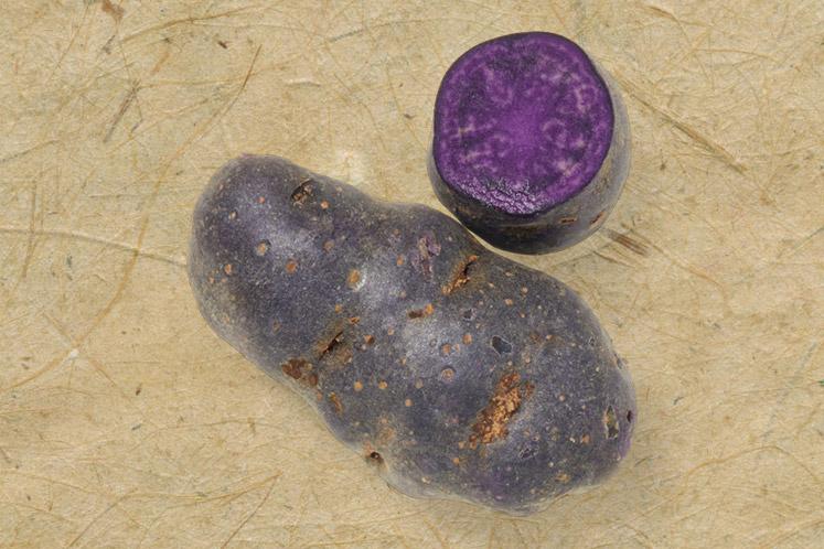 Truffel aardappel
