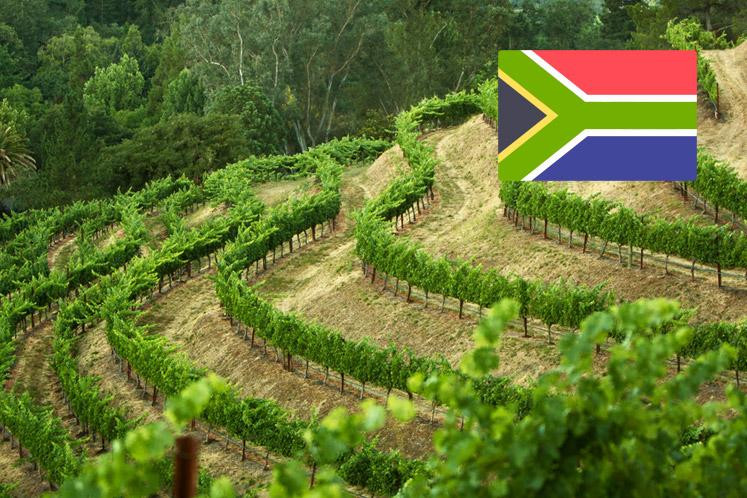 Zuid-Afrikaanse wijnhuizen
