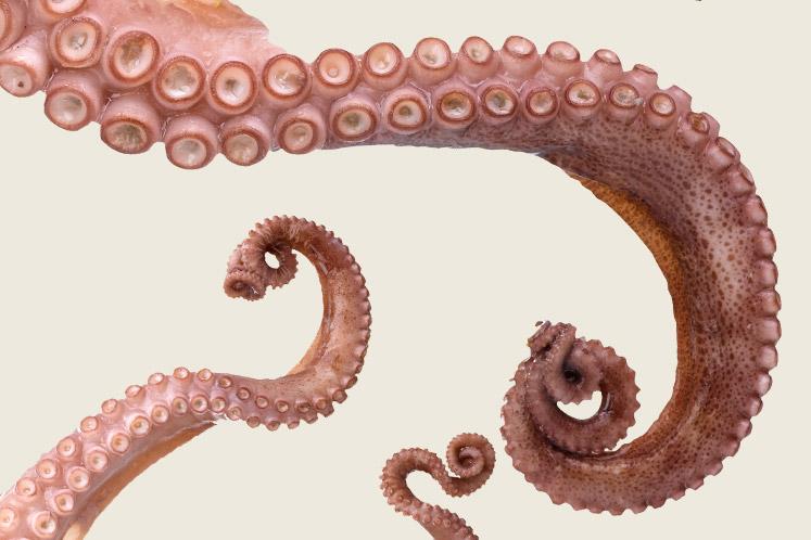 Calamar |  Inktvis en octopus