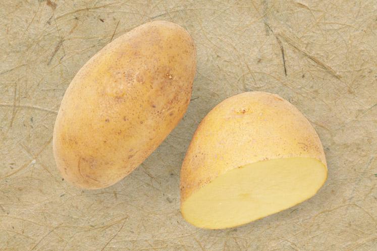 Agria aardappel