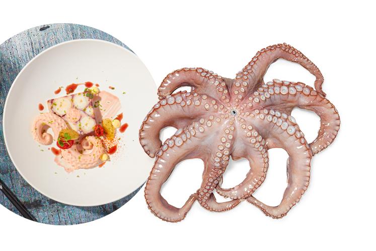 hea_han_mag_najaar_combi_octopus_747x498.jpg
