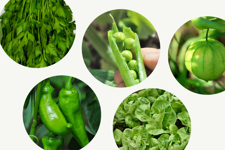 Groene groentes | HANOS