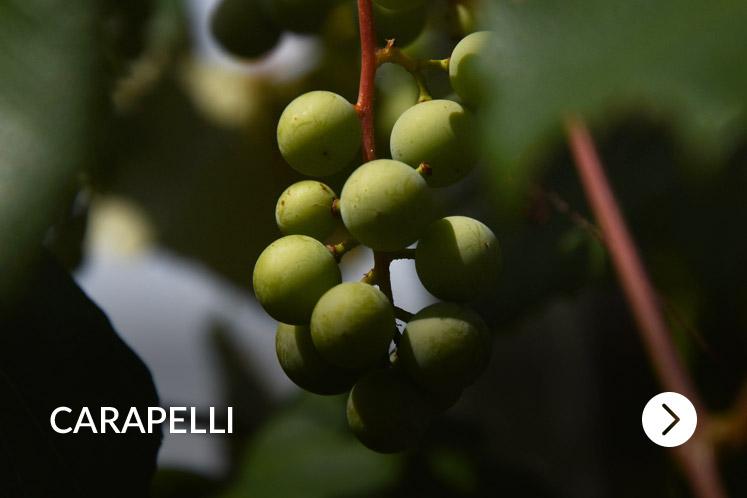 Carapelli olijfolie