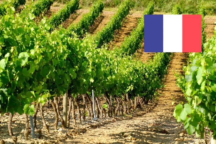 Franse wijnhuizen