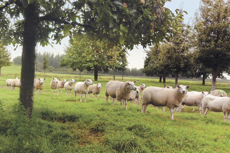 Lamsvlees bij HANOS