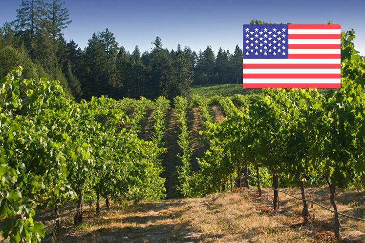 Amerikaanse wijnhuizen