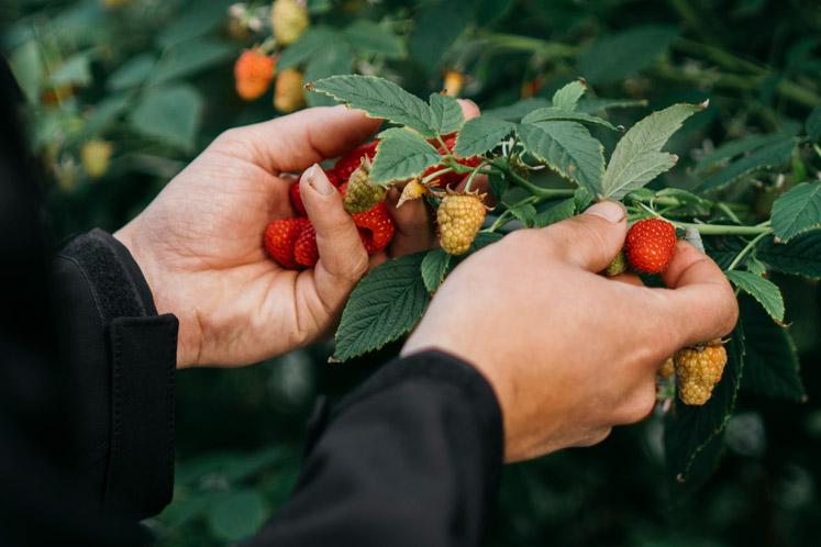 Vos fruit | IK KOOK BEWUST