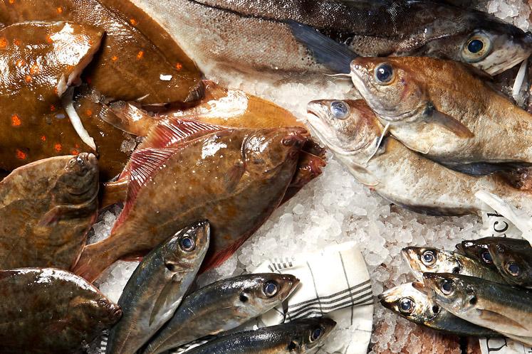 Nieuws | Versvishandel Jan van As