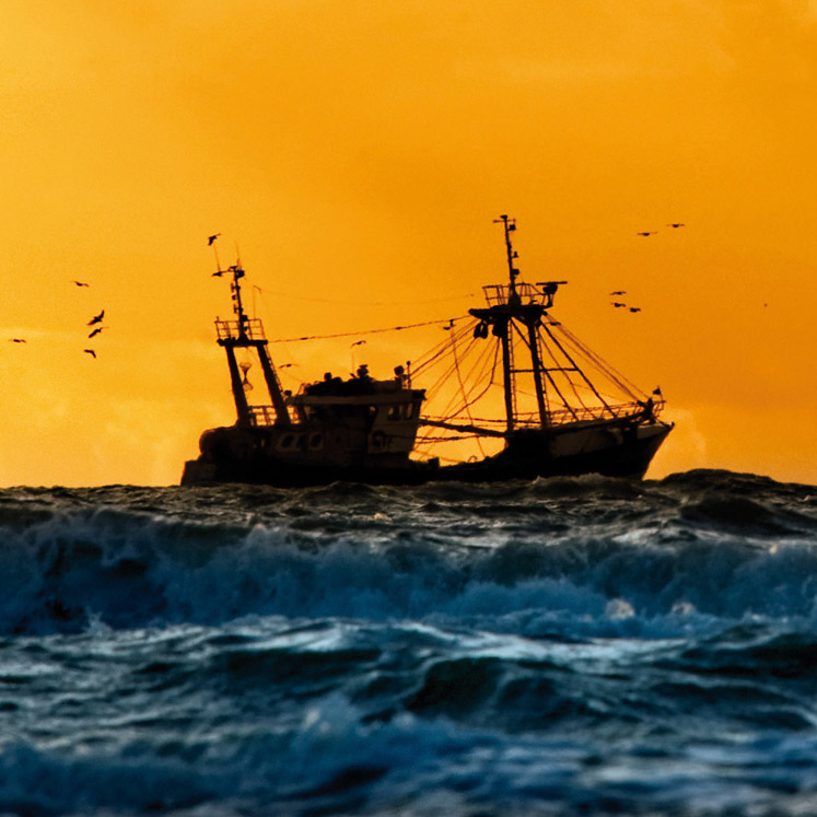 Beste vissers Hollandse vissersvloot