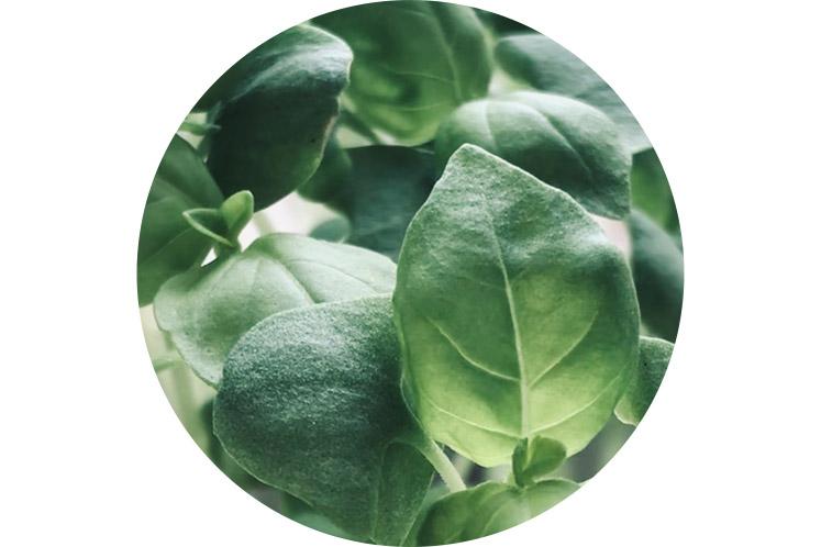 Spinazie | Groene groenten