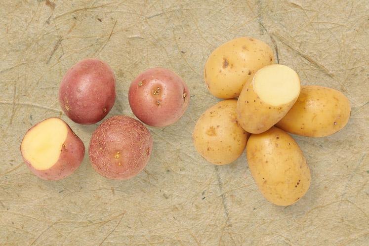 Krieltjes | Aardappelen