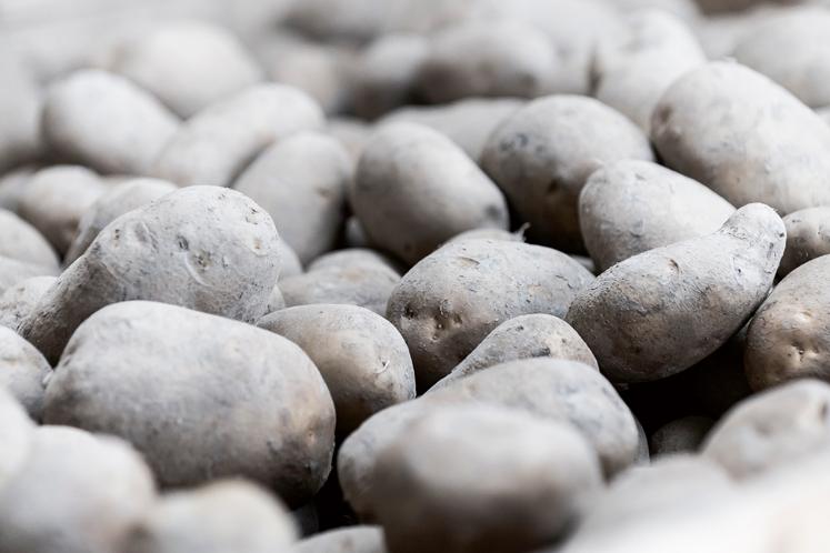 Aardappelen | HANOS