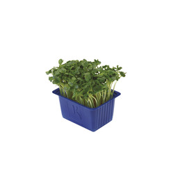 DAIKON CRESS SLEEVE BOX