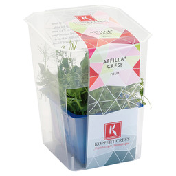AFFILLA CRESS SINGLE