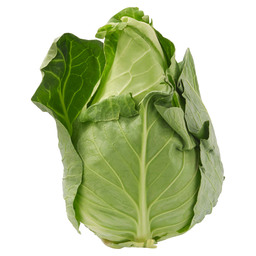 CABBAGE CONICAL