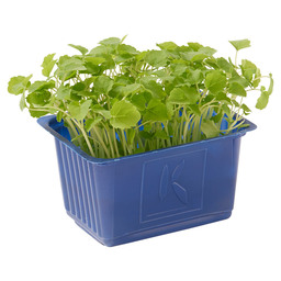 ATSINA CRESS SLEEVE BOX