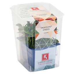 TAHOON CRESS  SINGLE