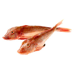 GURNARD RED*