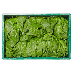 SPINACH BELGIAN