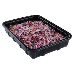 RED CABBAGE SPROUTS 100 GR
