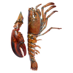 UHP LOBSTER SPLIT 200G