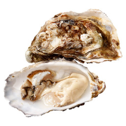 SPECIALE GILLARDEAU OESTERS NR.4 V&S