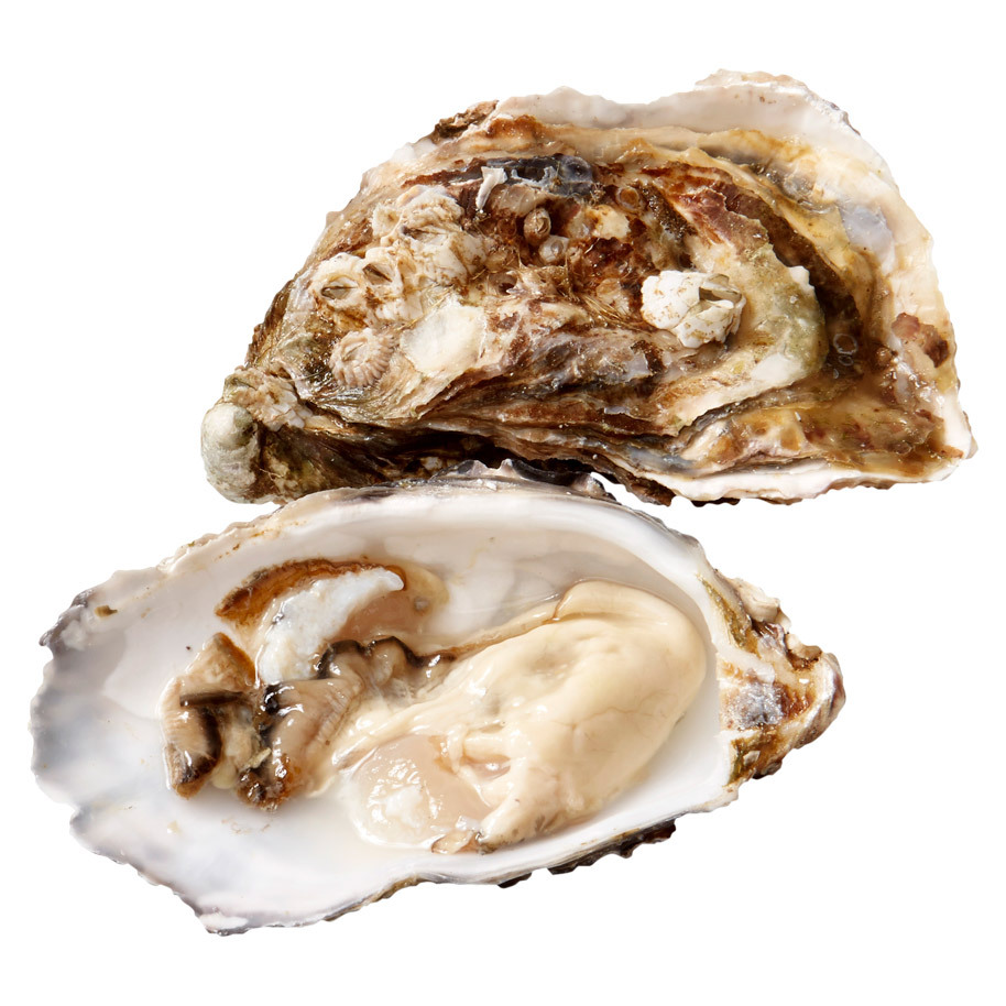 SPECIALE GILLARDEAU OESTERS NR.4     V