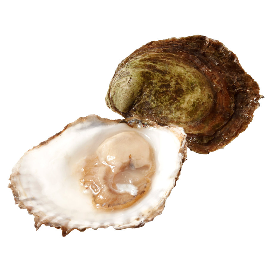 OYSTERS FLAT 4/0