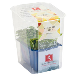 MUSTARD CRESS SINGLE BOX