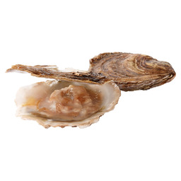 OESTERS PLAT 4/0