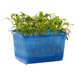 GHOA CRESS SINGLE BOX